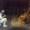 Radioaktivno gorivo Černobila, snimljeno deset godina nakon proboja jezgre