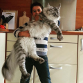 kol'ka mačketina