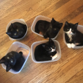 zamka za mačke
