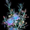 cvijet pod ultraljubičastim svjetlom 3