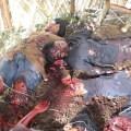 mai lai masakr – jedan od američkih zločina nad civilima