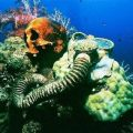 ostaci ronioca koje su prekrili koralji u mikroneziji