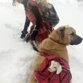 jedanaestogodišnja pastirka Hamdu Sena Bilgin spašava svoje stado od snijega